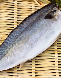 고등어살(특대)3kg